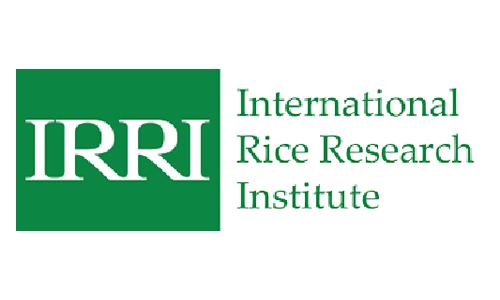 International Rice Research Institute IRRI